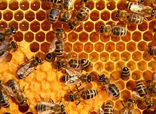 khasiat madu bagi tubuh dan kulit