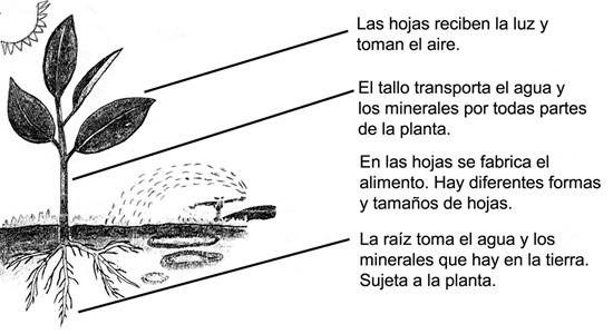 CuentosDeDonCoco.Com: FUNCIONES DE LAS PLANTAS - RESUMEN - PARA NIÑOS