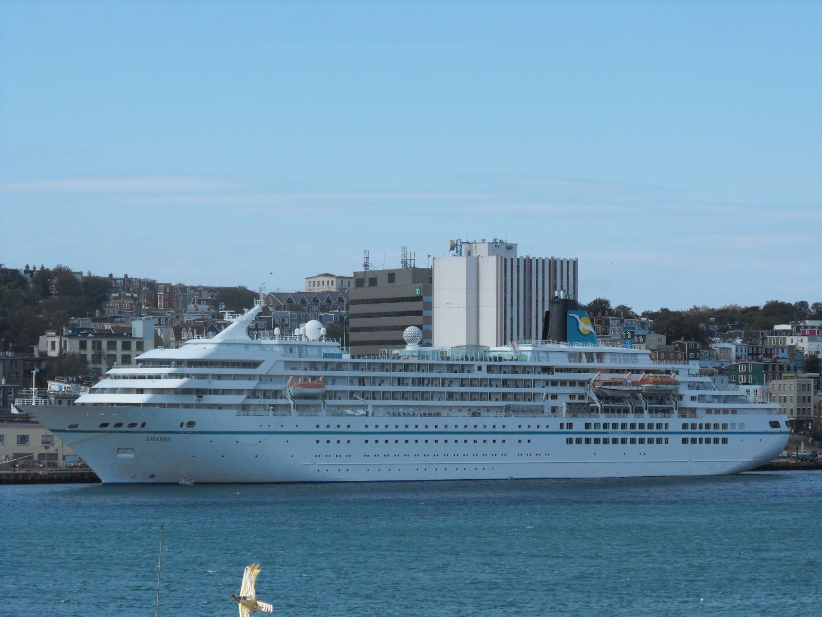 Ship Movements At St Johns And Other Ports In Newfoundland - Cruise ship amadea