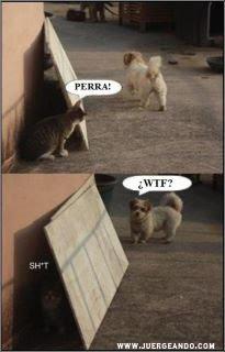 Perra!! xD,.... ¿WTF?