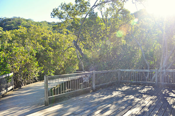 Bobbin Head boardwalk viewing area