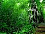 pakis dan bambu