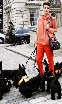 Cão na moda