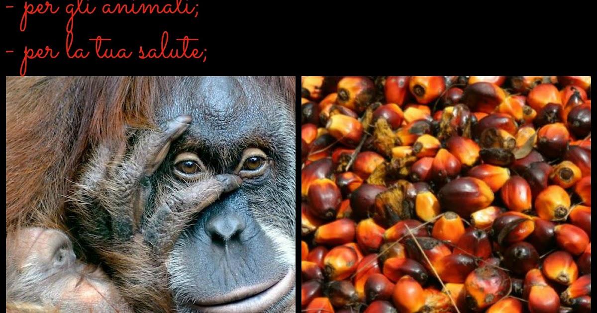 Roma nord antispecista prodotti vegan senza olio di palma - Colorazione pagine palma domenica ...