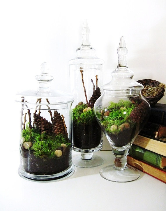 Start To Grow How To Make Your Own Terrarium