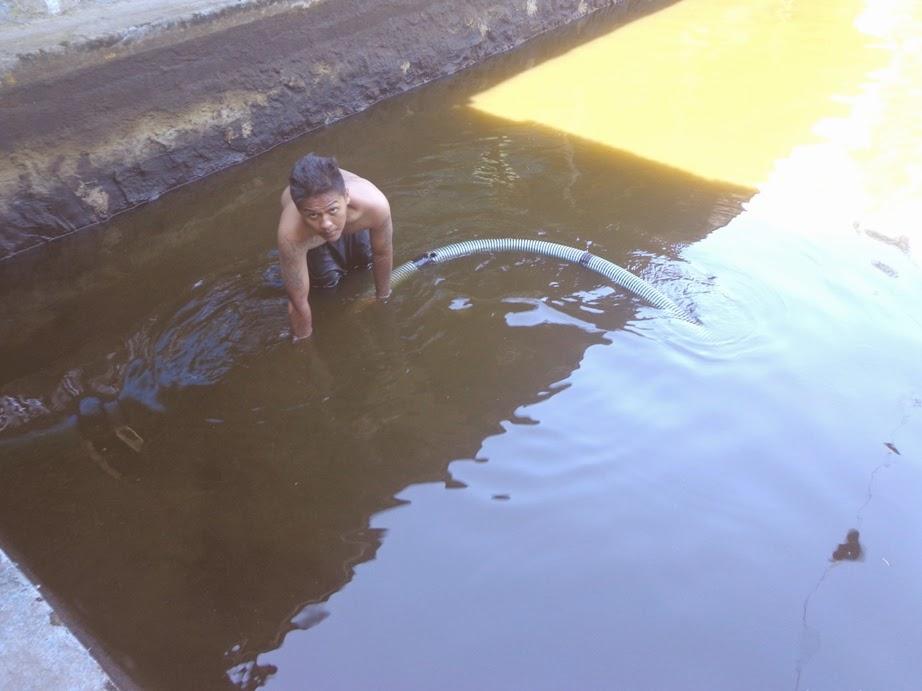 Ikan di kolam ikan Polanharjo banyak yang mati karena hujan