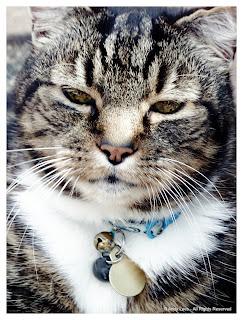 Dan the cat