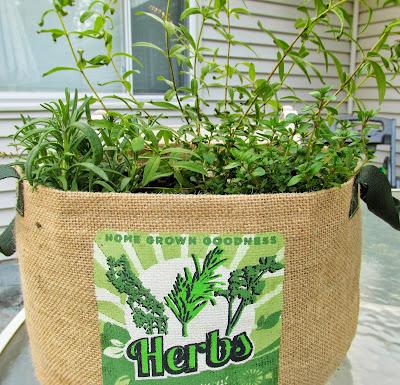 herbs in a grow bag