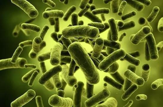 Как микробы и люди конкурируют за пищу