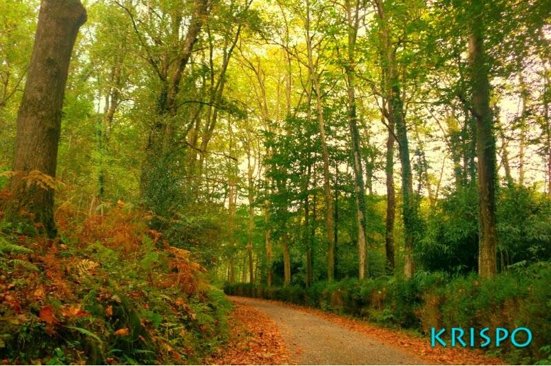 arboles y camino en otoño