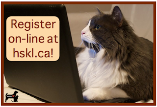 image Cat using laptop Humane Society Kawartha Lakes Offers Online Golf Registration