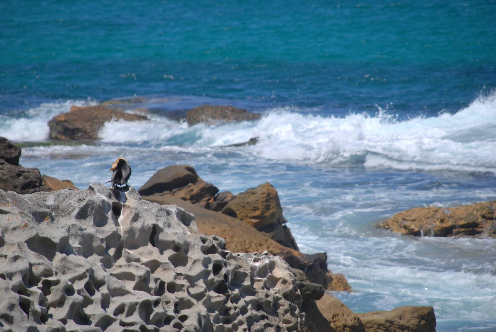 Bondi beach 51