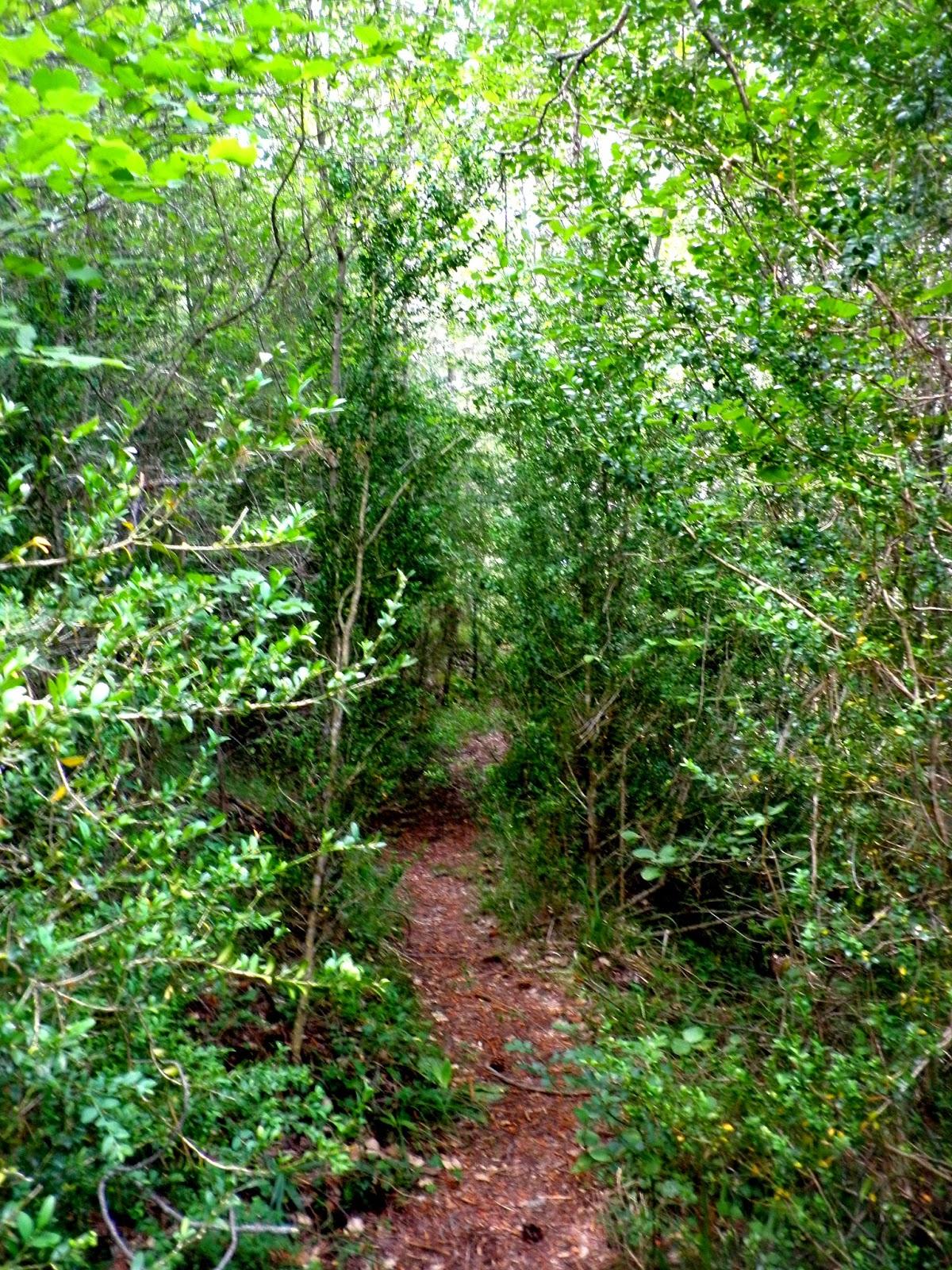 Paseo Botánico por la Hoz de Beteta