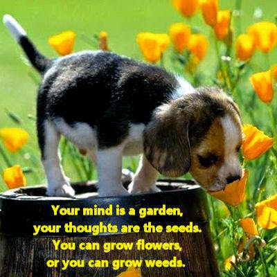 I choose to grow FLOWERS!