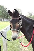 Arthur -- our Mule