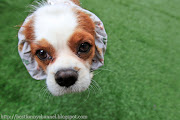 cute dog. Email ThisBlogThis!Share to TwitterShare to  cute dog