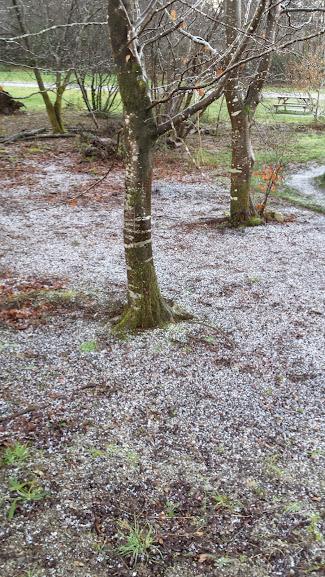 Winter at Lanhydrock Bodmin