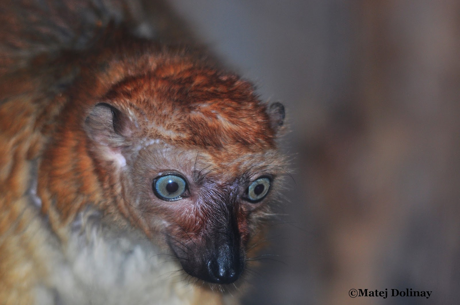 Evolutionary Vertebrate Zoology Evolucni Specialisti Na Planete