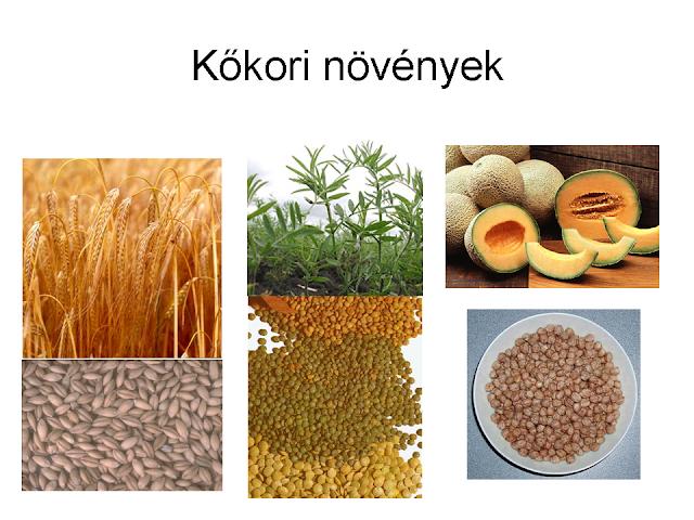 kőkori növények
