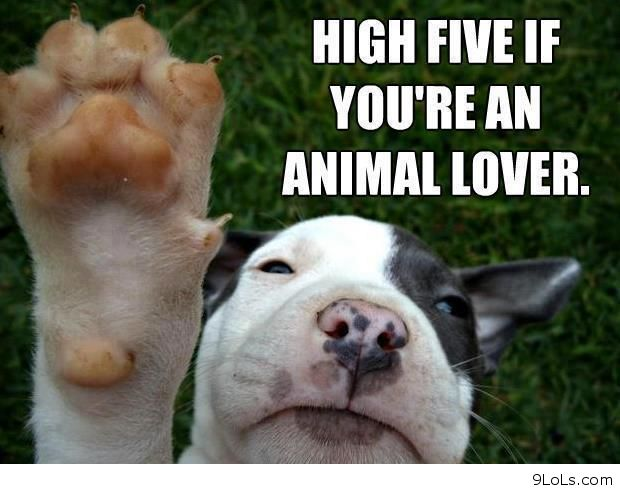 Funny Animal I Love You Quotes : Funny Animal Pictures Quotes.Click Here For More Funny Animal Pictures ...