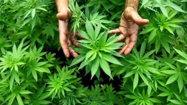 ¿El cannabis, la cura del Ébola?