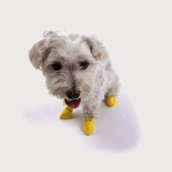 Creative Dog Products and Gadgets (15) 11