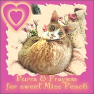 Purrs for Miss Peach
