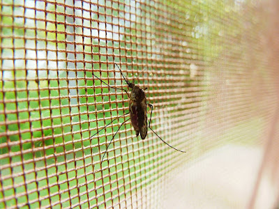 [Bisnis] Ingin Rumah Bebas Nyamuk? Ikuti 6 Tips Ini!