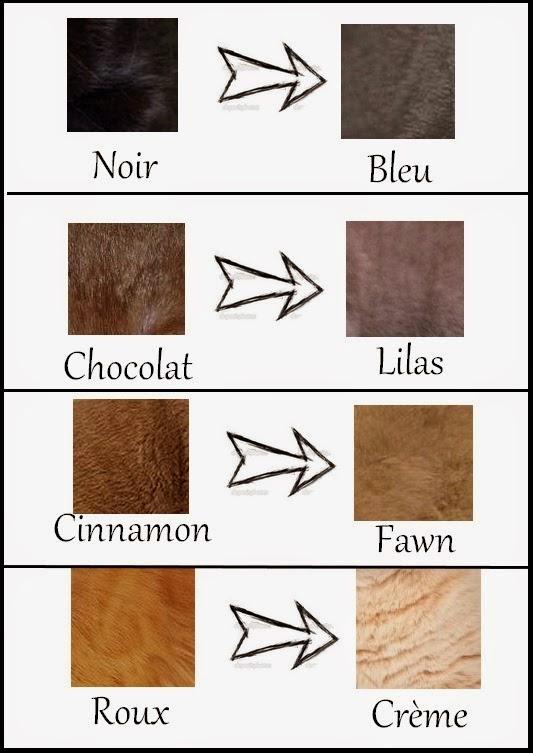 Cottonballragdoll: Ragdoll: Colores y patrones