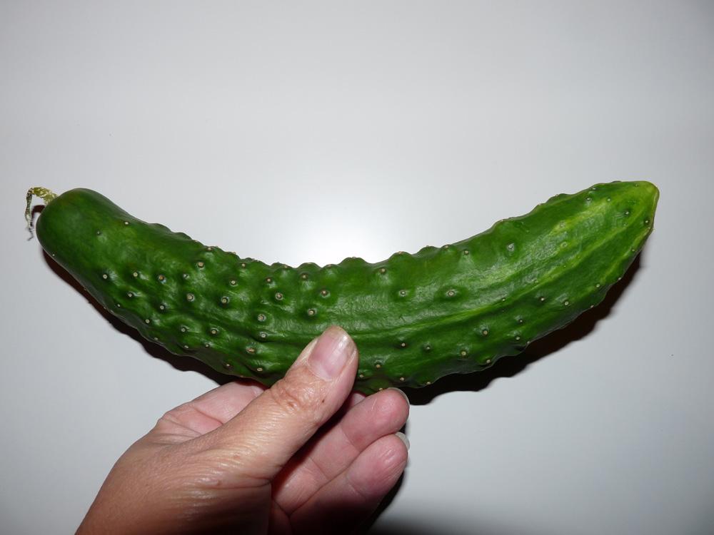 Käärmekurkku