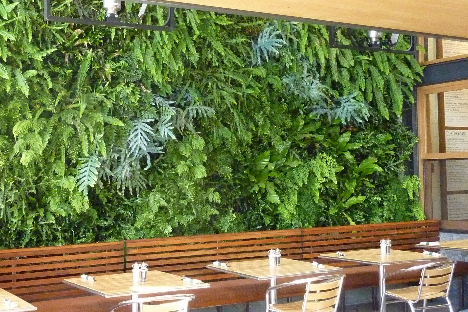 Plants on walls vertical garden systems fern wall for for Wall plants outdoor