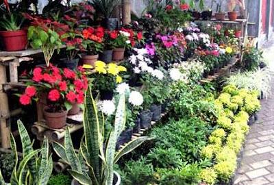Usaha sampingan bidang pertanian tanaman hias