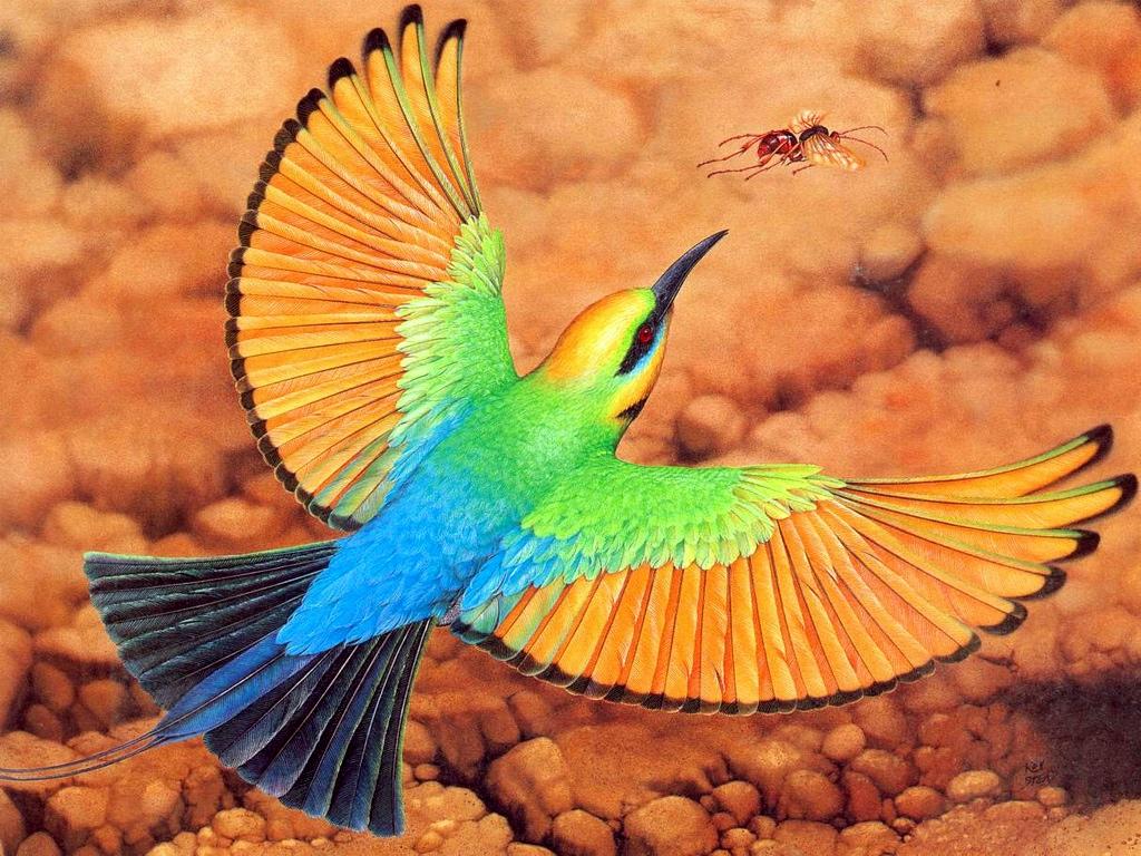 Arı zararlıları: Arı kuşu