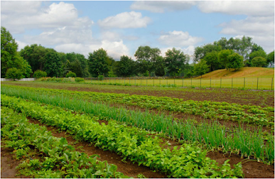 rhode_island_offering_agriculture_grants