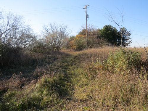 trail through grass