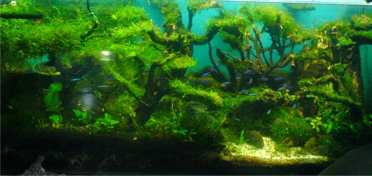 Gallery simple aquascape - Gambar aquascape ...