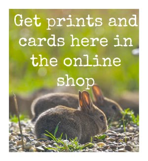 BROWSE THE PRINT SHOP....
