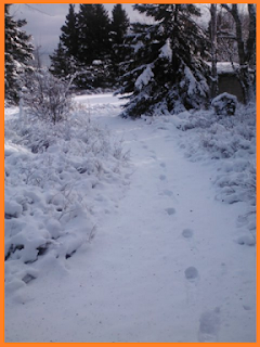 One set of boot prints heading down a snow covered trail surrounded by trees and brush (also covered with snow).