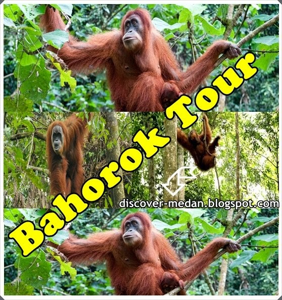 Bahorok Tour Packages