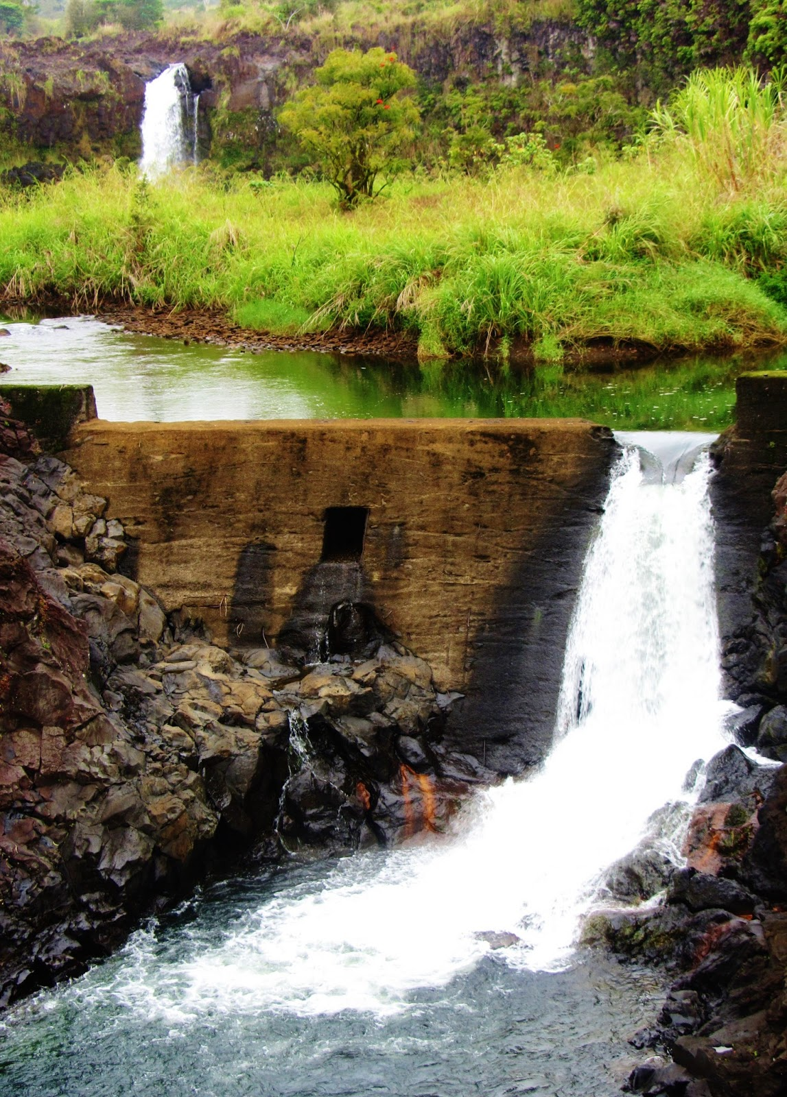 Sweet Dreams Are Made of These...: Big Island of Hawai\'i