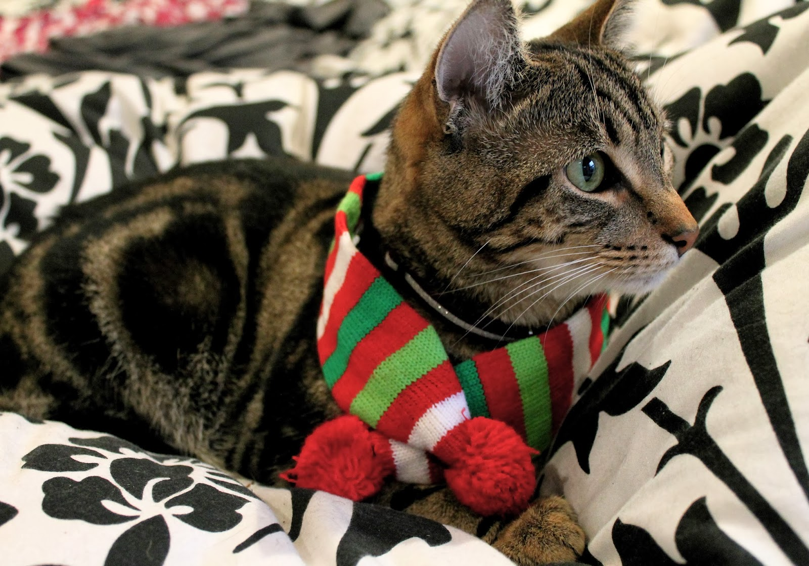27 Cats That Are Totally Ready for Christmas - BlazePress