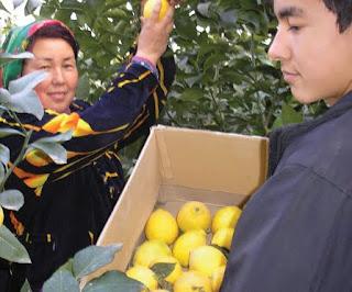 microfinance uzbekistan ouzbekistan