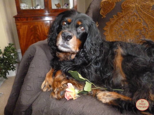 Molly The Wally & A Rose.
