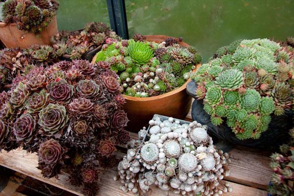 vinter växter utomhus