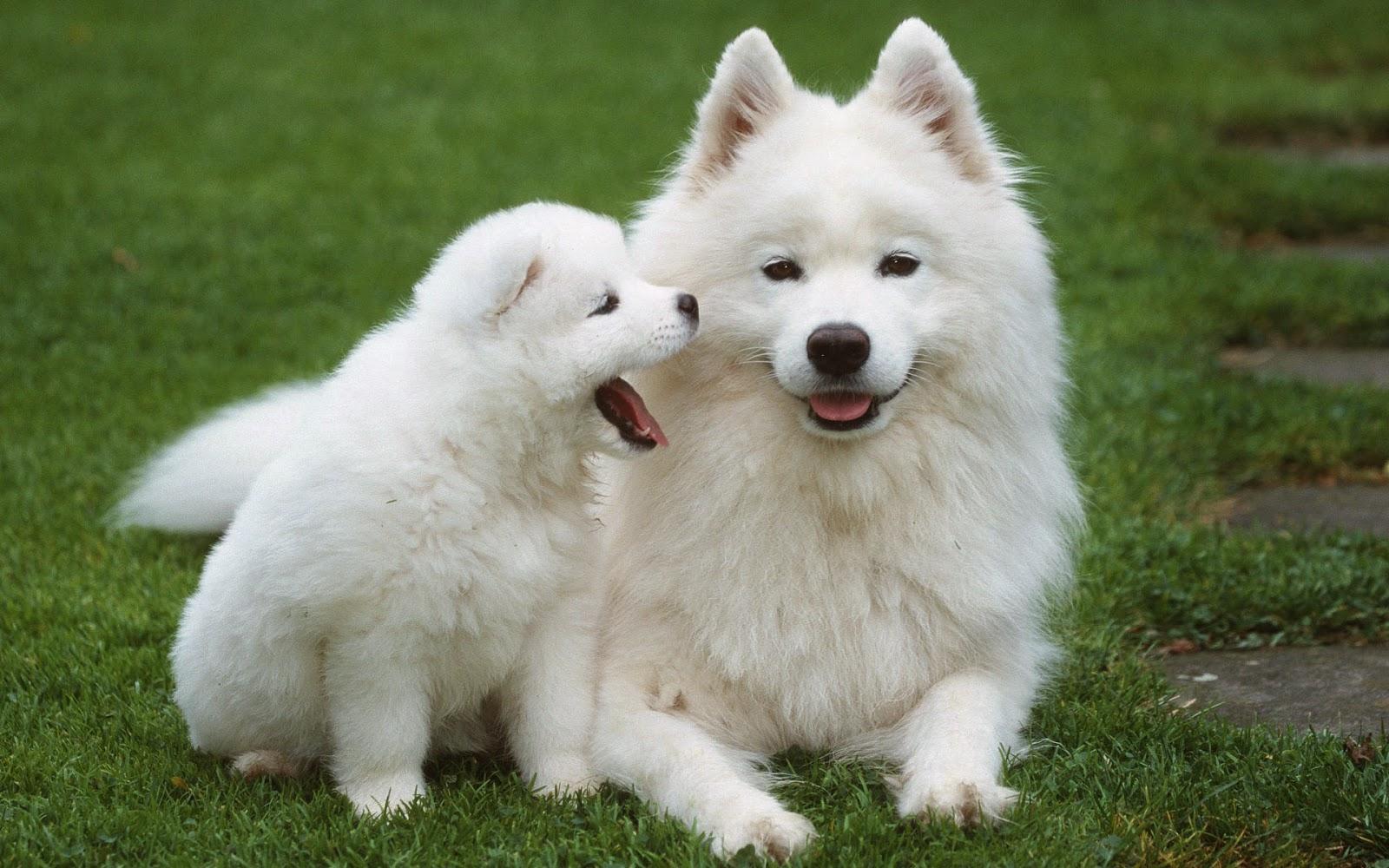 INFO Penjelasan Hukum Orang Islam Membela Anjing Dalam Islam