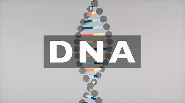 Video Animation : All You Need to Know About DNA ~ The *Official AndreasCY*