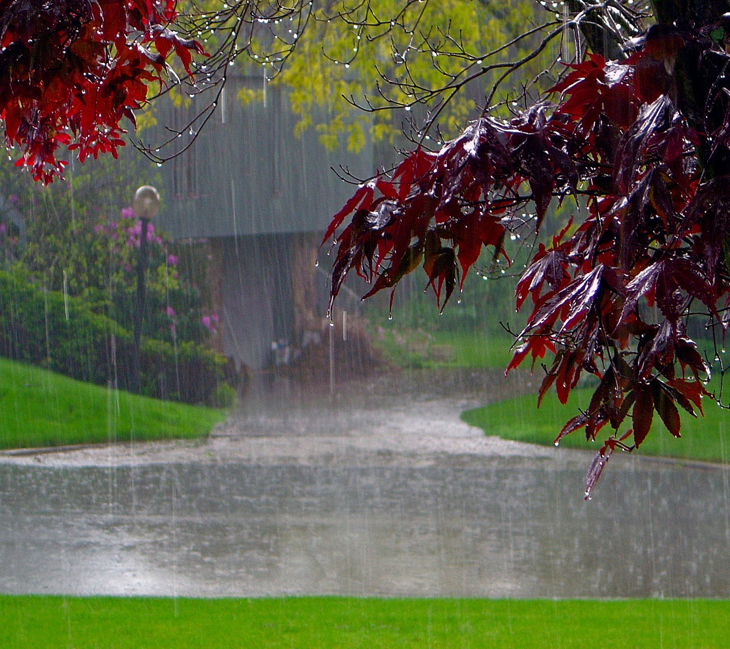 romantic rainy wallpaper - photo #7