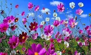 λουλουδια, ρολοι, μειονεκτηματα, γραναζια