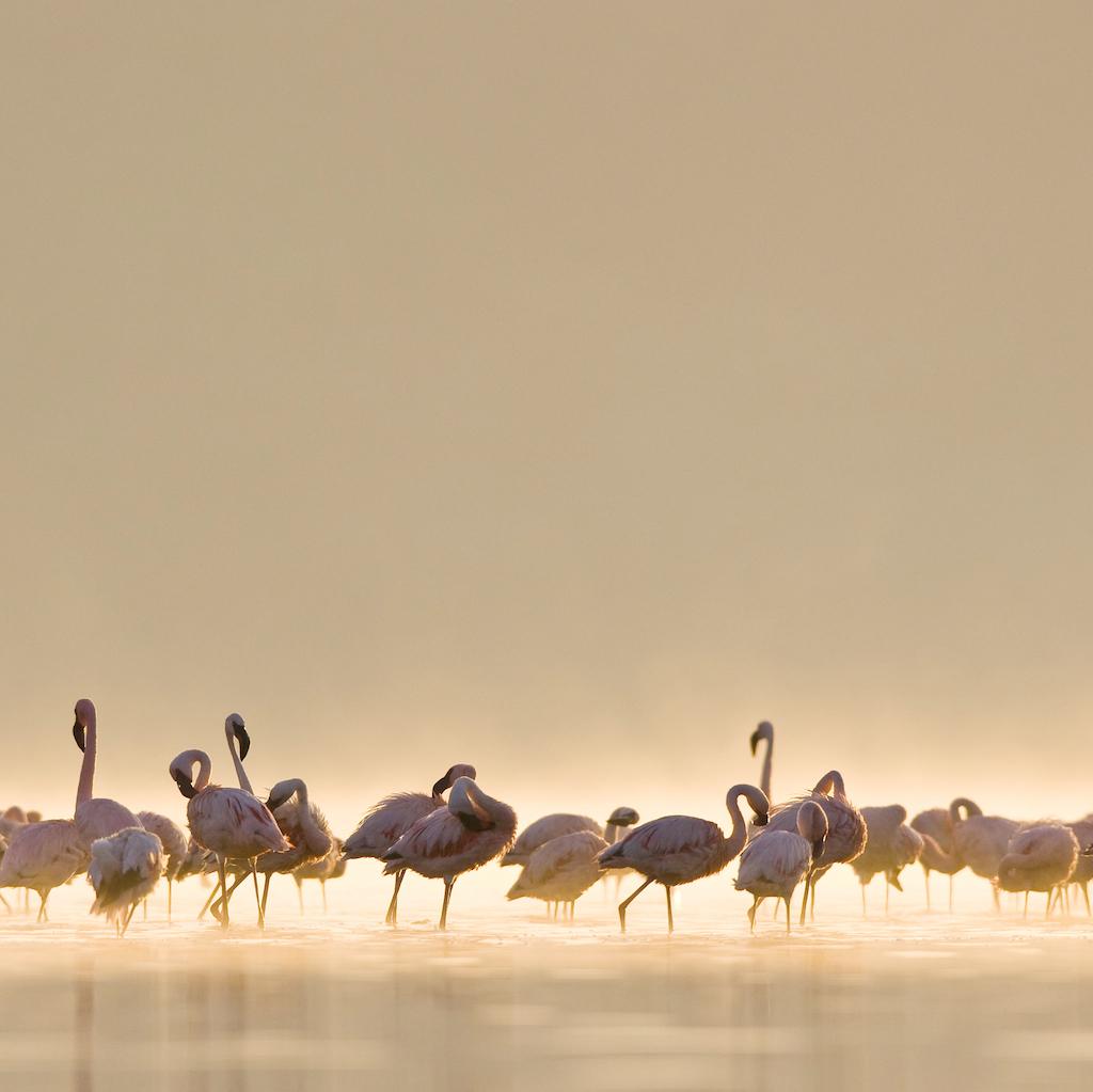 http://1.bp.blogspot.com/-mSWLLDDJqrQ/TdQRrCk5BeI/AAAAAAAAAms/aQbMyvTACs0/s1600/Flamingos.jpg