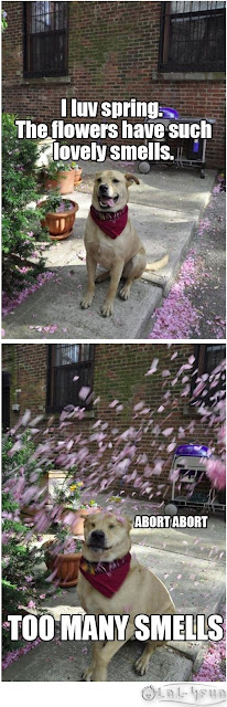 Funny dog at spring time